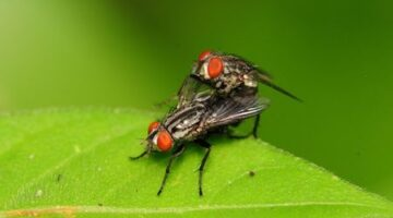 Can Previous Mating Partners Influence The Traits Of Future Offspring?