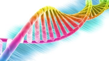 Does Everybody Have a Gay Gene?