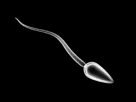 What Does (And Doesn't) Impact Men's Sperm Health