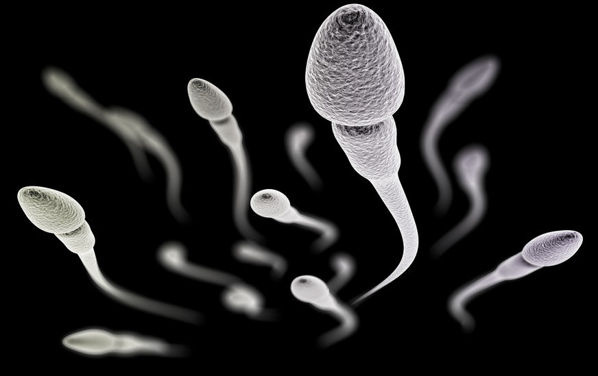 The Science of Sperm: How This Microscopic Organism Travels Great Distances